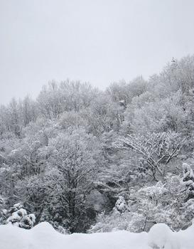 雪が積もった