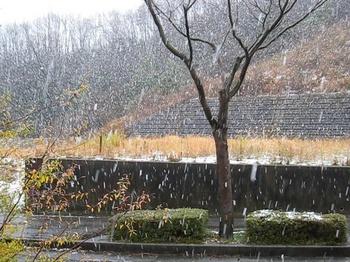 ボタ雪が降る