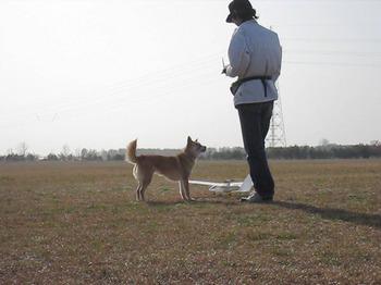 愛犬と飛行準備