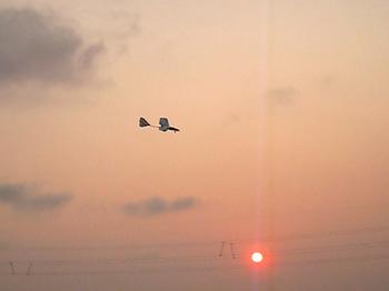 夕焼けに飛ぶサバンナ